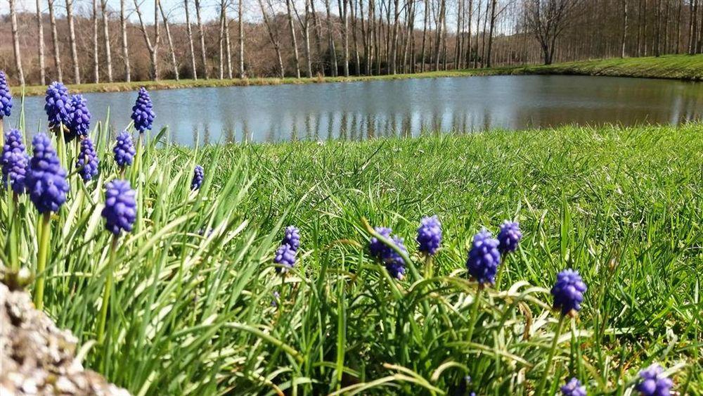 notre parc Demoiselle au printemps