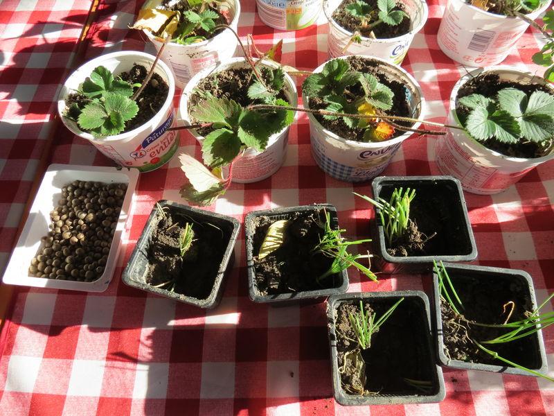 troc plants