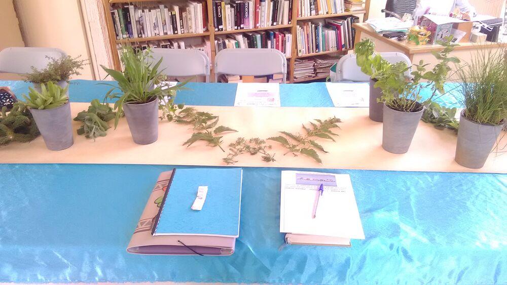 plantes bienveillantes